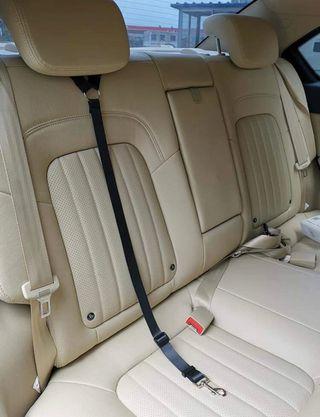 Cinturón de seguridad de vehículos para perros