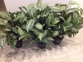 Plantas artificiales con maceta incluida
