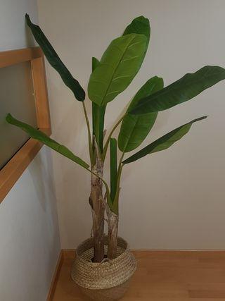 Planta artificial Bananera