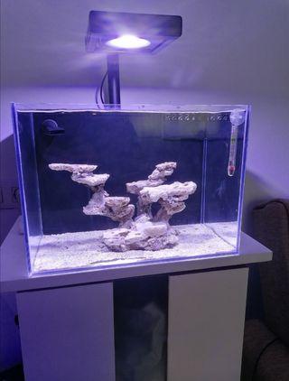 nano reef, acuario marino.