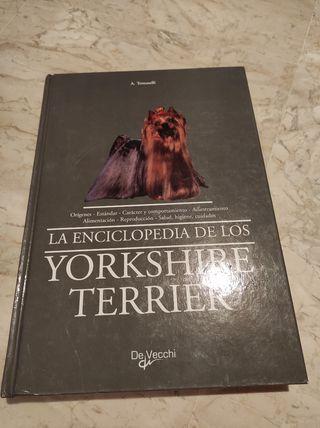 Enciclopedia Yorkshire Terrier