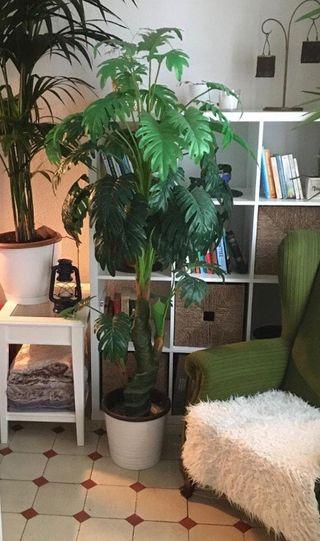 Planta artificial, 175cm altura