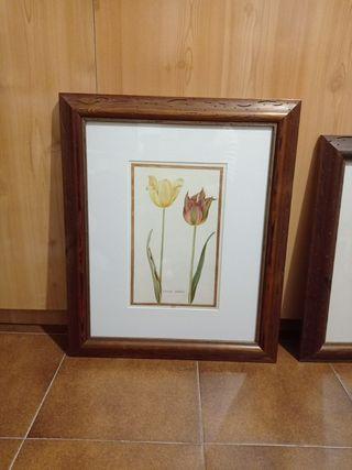 cuadros tulipanes, precio por los dos