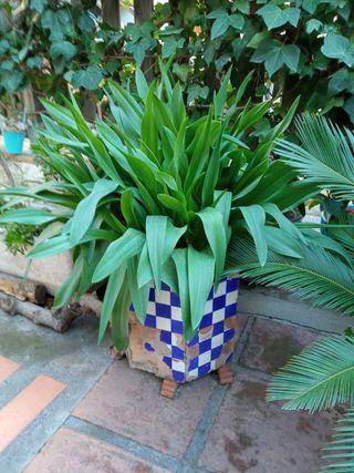 Diferentes plantas