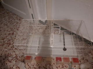 jaula para crías de canarios, con separador