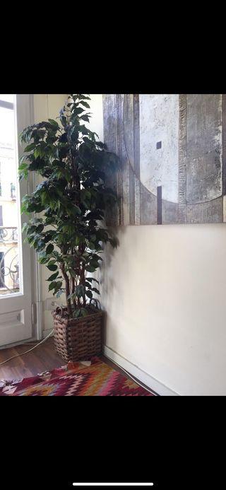 Planta artificial ficus benjamina