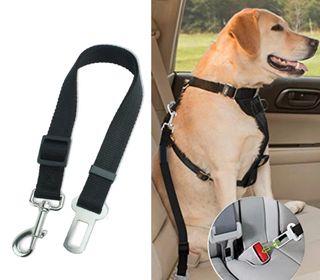 Cinturón de seguridad para el perro