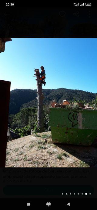 poda de árboles tala limpieza de parcelas
