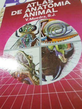 atlas de anatomía animal veterinaria