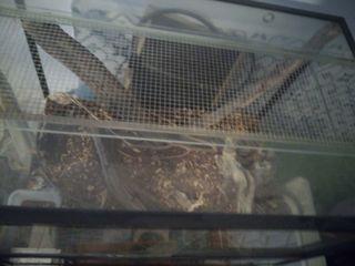 Terrario de cristal para reptil
