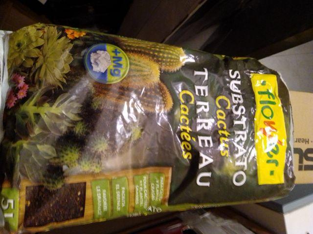 substrato para cactus regalo semillas lithops