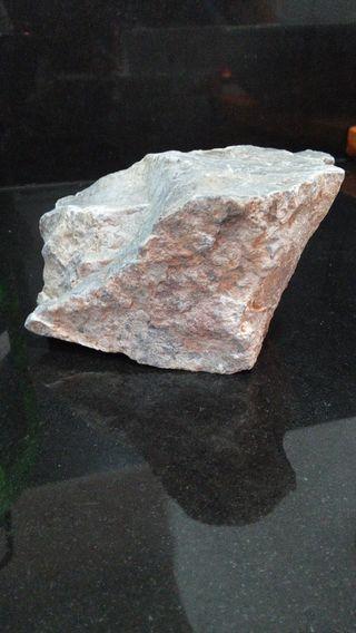 Roca dragón acuario