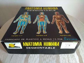 Antiguo juego Anatomía humana desmontable