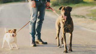 Paseo perros 25€/semana