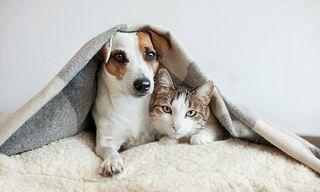 Paseo perros y cuido gatos