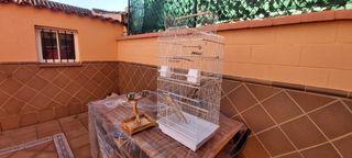jaula para loros, ninfas...