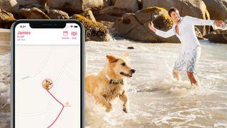 Localizador GPS para perros | Nº1 en el mundo.