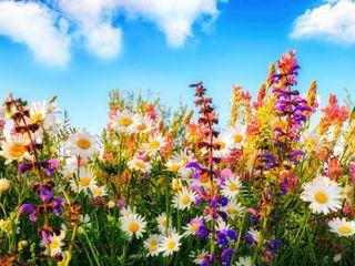 lote de semillas de flores
