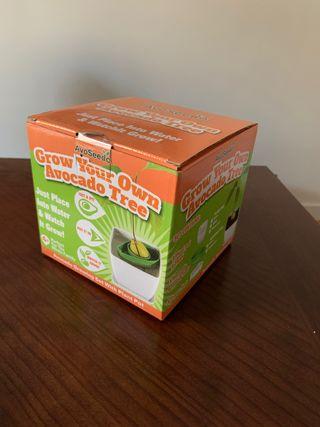 Kit para cultivar aguacates