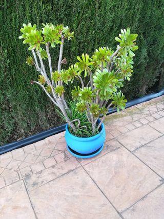 se vende planta natural