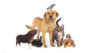 ONG Ayuda animal