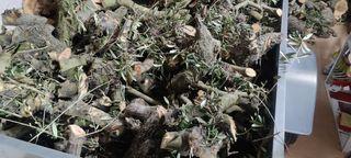 olivo leña barbacoa