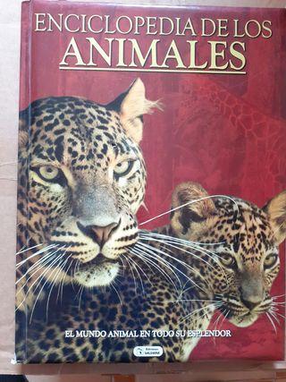 Libro infantil Enciclopedia de los animales