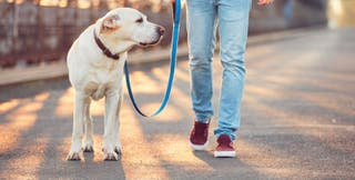 Pasea perros