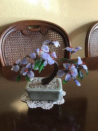 Bonsai decoracion