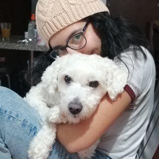 Paseo y cuidado de perros