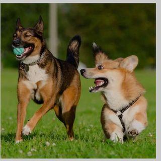 Paseo perros por Alpedrete