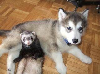 Cuido mascotas y paseo perros. Carnet de ATV