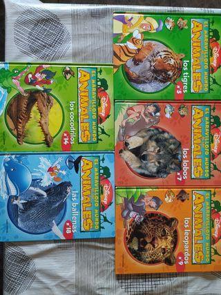 Llibres El maravilloso mundo de los animales