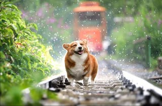 Paseo perros capital