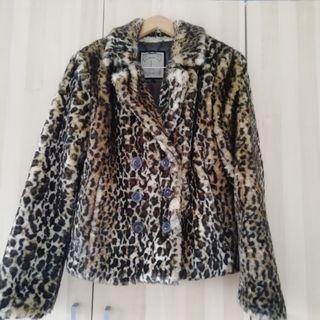Chaceta leoparda L