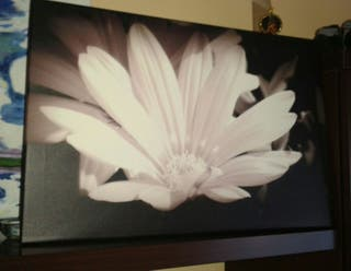 Cuadro de flor en blanco y negro. También naranja