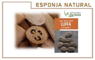 Semillas Esponja Natural Luffa