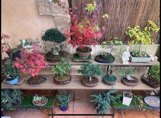 Colección de bonsai