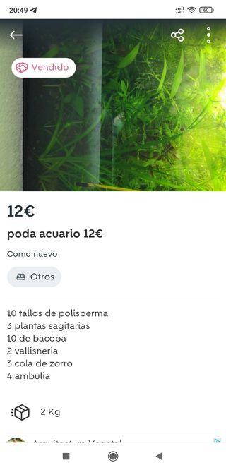plantas acuario poda