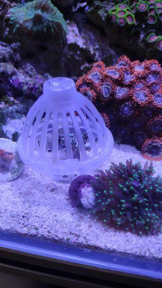 Jaula para esquejar corales