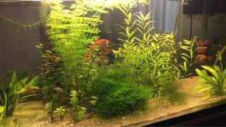 Plantas acuario por desmonte