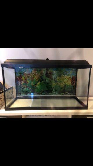 Se vende acuario de 100 litros