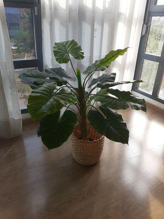 Planta de Plastico.
