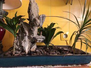 Maceta grande de cerámica con plantas