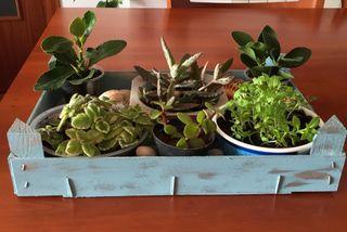 Conjunto de 6 plantitas