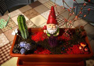 Terrario temático cactus