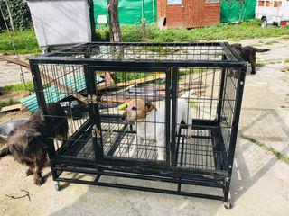Jaula de perro reforzada