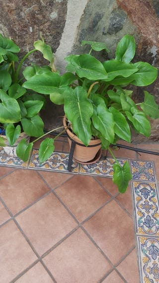 maceta y planta