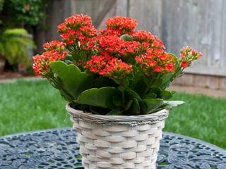 Planta flor interior exterior 5 últimos