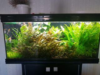 planta acuatica